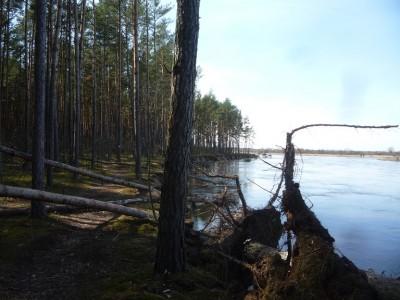Było to o tyle ryzykowne podejście, że w okolice grasowały krwio- (a przynajmniej koro-)żercze bestie, które powalały łany lasu...