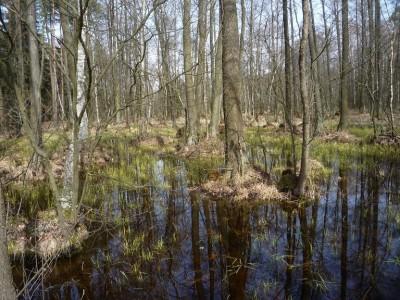 Bowiem mimo ogólnie suchej pogody, miejscami wody miały tendencje do zalegania.