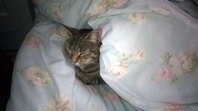 W łóżku na kocią łapę